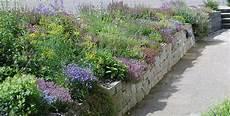 pflanzen für trockene schattige standorte wildpflanzenbeet selber planen und anlegen