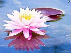 the meaning and symbolism of the word lotus