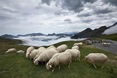 Gambar Gunung Padang Rumput Pegunungan Kawanan