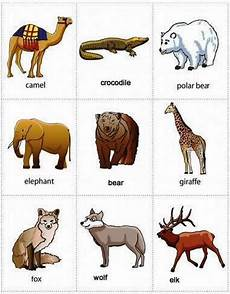 Gambar Nama Nama Hewan Dalam Bahasa Inggris Yang Cocok