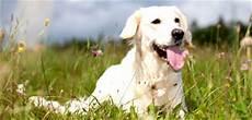 mit hund der fti hundeurlaub urlaub mit hund