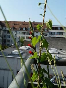 gem 252 se naschen blumentopf gladiolen winden und