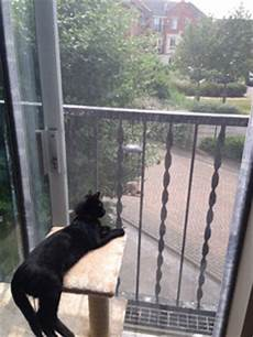 Apartment Protection Dogs by Window Protection For Cats In The Usa Open Your Windows