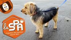 spa arras animaux sauver un chien l adoption en refuge spa