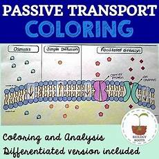 transportation worksheets for middle school 15201 cell transport passive transport coloring with images passive transport cell transport