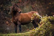 andalusier hengst im herbst pferdefotografie in der