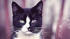 Was Braucht Eine Katze - entropion in cats an eye deformation petcarerx