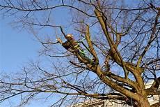 bis wann darf bäume schneiden wann baume schneiden