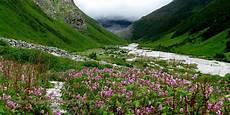 Flower Valley Wallpaper by Valley Of Flowers Gallery And Wallpapers