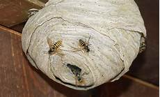 Wespen Vertreiben Selbst De