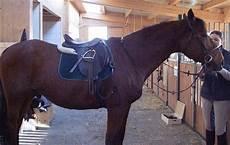 Malvorlage Pferd Mit Sattel Pferdeausruestung