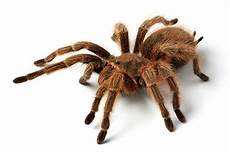 angst vor spinnen spinnenangst