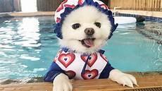11 Alasan Berenang Baik Untuk Anjing Arenahewan