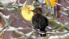 einheimische vögel im winter im winter heimische v 246 gel bestimmen ndr de ratgeber