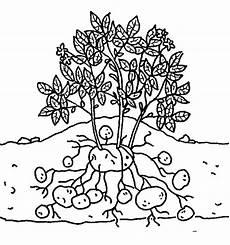 Malvorlagen Kartoffel Ausmalbilder Ausmalbilder Kartoffel