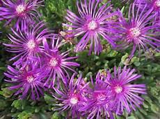 Fleurs Pour Rocaille