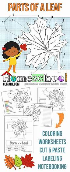 science worksheets leaves 12281 free parts of a leaf science notebook worksheets coloring pages labeling charts cut and paste