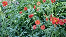 fleurs qui fleurissent en mai