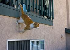 Apartment Protection Dogs by High Rise Keeping Your Cat Safe From Falls
