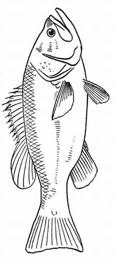 Malvorlagen Fische Jung Malvorlage Fisch Zeichnen Malvorlage