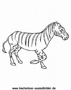 ausmalbilder zebra 5 tiere zum ausmalen malvorlagen zebras