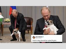 Photos of Vladimir Putin with puppy, gifted by