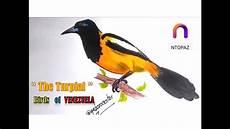 dibujo turpial serie aves de venezuela dibujando un turpial youtube