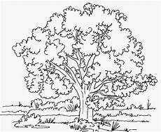 Ausmalbilder Zum Ausdrucken Natur Ausmalbilder Malvorlagen Baum Kostenlos Zum Ausdrucken