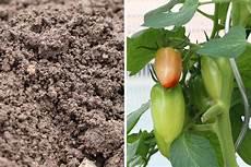 Tomaten Pflanzen Wann Ist Die Beste Pflanzzeit Tomaten De