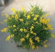fiori profumati da giardino l hort de pqpi plantas arom 225 ticas manuel rodr 237 guez
