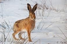 Drei Kreativnachmittage Zum Thema Tiere Im Winter