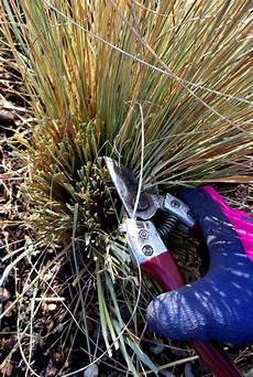 wann gräser schneiden gr 228 ser schneiden garten gr 228 ser schneiden gr 228 ser und