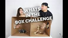 whats in the box challenge freaks out youtube