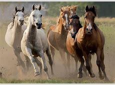 Puzzle Herd of wild horses, 1 000 pieces   Puzzle ART.eu
