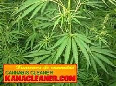 terre pour faire pousser cannabis cours pour cultiver le cannabis en outdoor les effets du