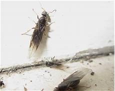 ameisenbekämpfung im haus ameisenbek 228 mpfung wichtiges 252 ber die bek 228 mpfung ameisen