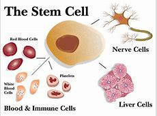 advantages of embryonic stem cells