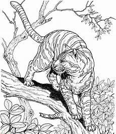20 Mewarnai Gambar Harimau Untuk Tk Paud Sd