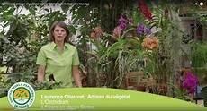 comment arroser et cultiver une orchid 233 e l entretien des