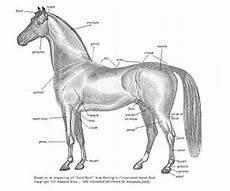 Morphologie Du Cheval Wikip 233 Dia