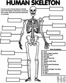 human skeleton worksheet grow little seeds week 2 elementary anatomy