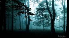 bruit de pluie et vent bruits de la nuit grillons pluie vent dans les branches hiboux et musique relaxation