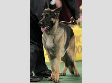 Westminster Dog Show: 2012?s best named dogs   The