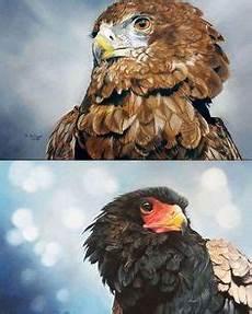 Vogel Malvorlagen Instagram Die 21 Besten Bilder Vogel Malvorlagen Vogel