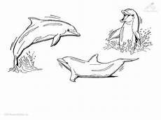 Malvorlagen Delphin Ausmalbild Delphin Imagui