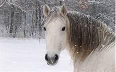 Ausmalbilder Pferde Im Winter Winter Foto Mit Einem Pferd Im Schnee Hd Hintergrundbilder