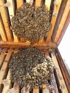 neujahrsgr 252 223 e der bienen bienen