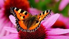 Die 50 Besten Blumen Und Schmetterlinge Hintergrundbilder
