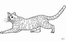 Ausmalbilder Siamkatze Ausmalbild Katze Ausmalbilder Kostenlos Zum