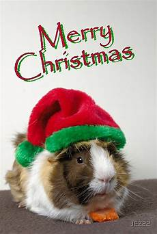quot merry christmas guinea pig quot greeting cards by jez22 redbubble